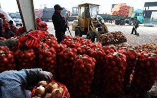 中国洋葱农药残留超标 日本寻求新产地
