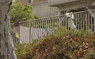來美國產子的月子中心藏身加州民宅