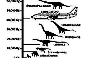 迄今最大恐龙化石被发现 体重超737客机
