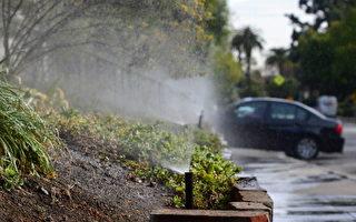 南帕萨迪纳限水新措施   浇水分单双号