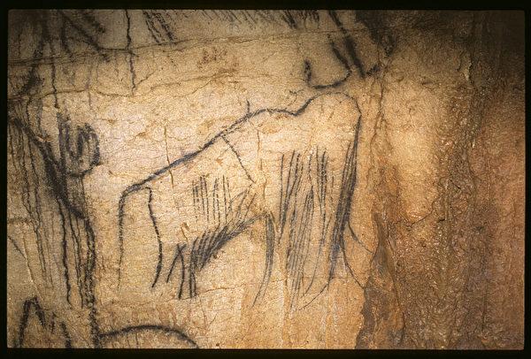 洞内的猛犸象。(Centre de Préhistoire du Pech Merle提供)