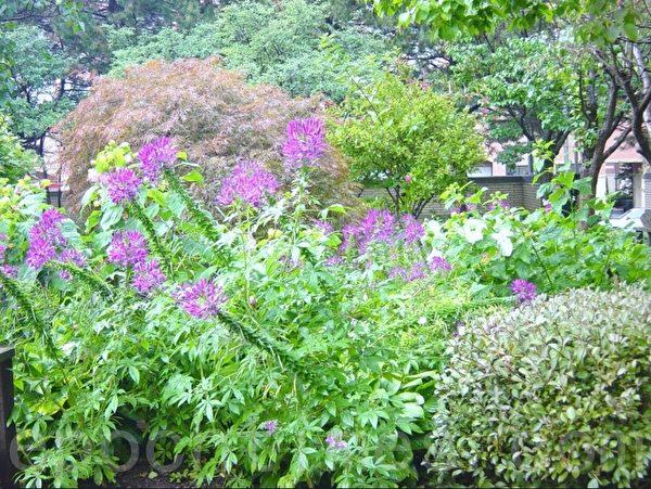 花园有许多不同时候开的花,这是花园的一角。(李文笛/大纪元)