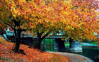 麻塞诸塞州波士顿公共花园枫红(Fotolia)