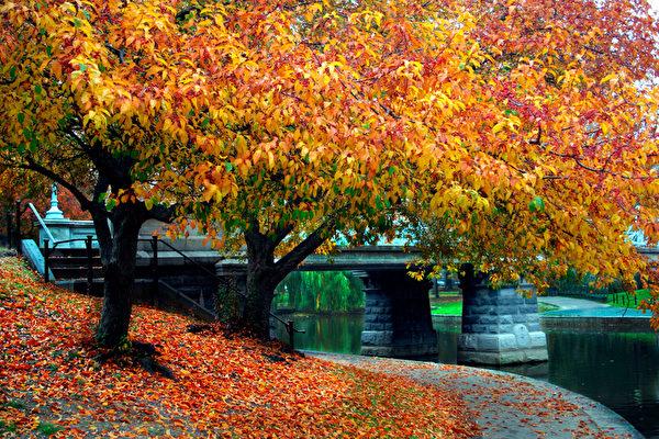 麻塞諸塞州波士頓公共花園楓紅(Fotolia)