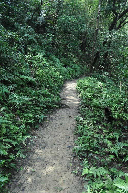 山路原始自然,而且路況良好。(圖片提供:Tony)