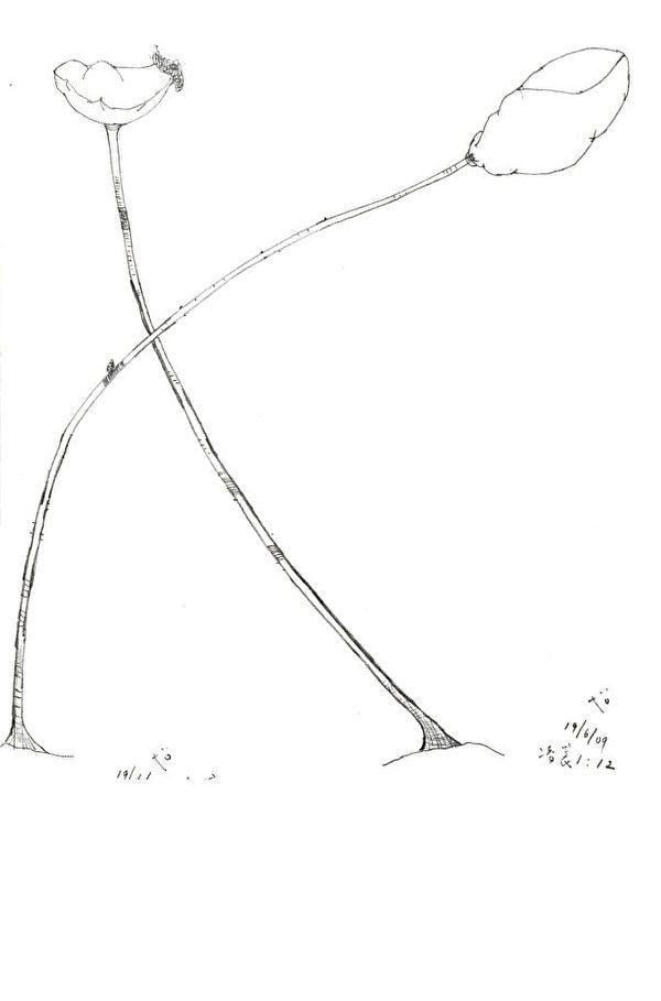 图:在列治文居民Raymond家的苹果上开了一簇优昙婆罗花。(大纪元资料图片)