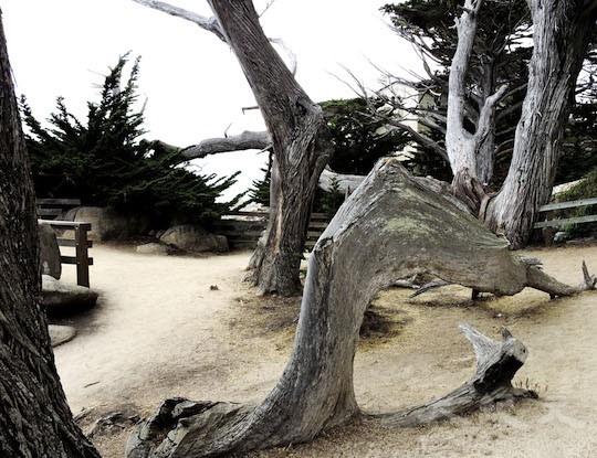 魔鬼树( Ghost Tree)(地图上的景点17﹣18)(王文艺/大纪元)