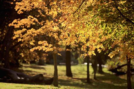 10月16日,英国利物浦的塞夫顿公园美丽秋色。(Christopher Furlong/Getty Images)