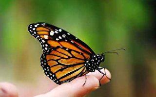 亡妻变成蝴蝶归来 多个故事证实灵魂存在
