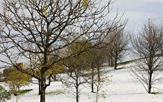 11月7日是立冬,中國傳統習俗過完立冬象徵進入冬季,在冬天這個季節時,萬物都得閉藏,人必須在此時「養藏」。(唐浩/大紀元)