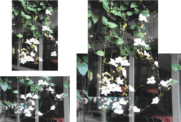 李招治,《飘荡》,(中华亚太水彩艺术协会提供)
