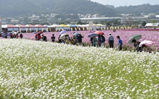 今年新社花海有一个月赏花期,台中市观光局预估,上山游客上将突破去年256万人次纪录。(苏玉芬/大纪元)