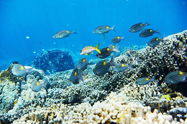 日本沖繩宮古島海水晶瑩透徹,海裡有100種以上的熱帶魚和70種以上的珊瑚礁。(由宮古島「Eco Guide Cafe」提供)