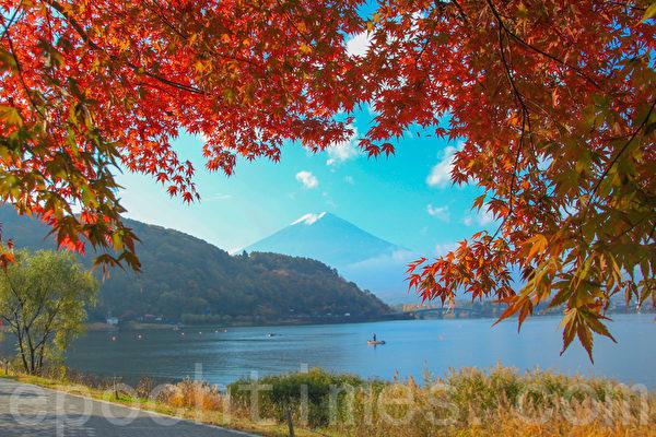 红叶与富士山。位于富士山山脚的著名富士五湖之一的河口湖正值红叶灿烂的季节。摄于2014年11月8日。(野上/大纪元)