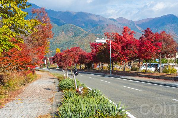 位于富士山山脚的著名富士五湖之一的河口湖正值红叶灿烂的季节。摄于2014年11月8日。(卢勇/大纪元)