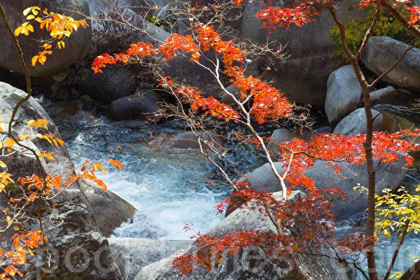 日本著名景点升仙峡的红叶,摄于2014年11月8日。(卢勇/大纪元)