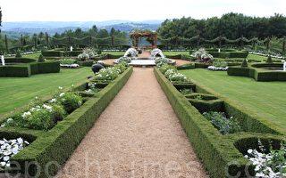 艾裡-納克花園裡的白花園,種著美麗的白玫瑰,在不同的綠色調中脫穎而出,增加了整個花園的詩意和亮度。(蔡穎/大紀元)