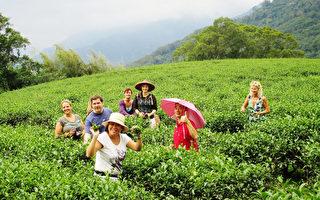 德國旅遊業者基金會 Willy Sharnow Stiftung台灣旅遊團在Travel Talk 雜誌圖文並茂介紹台灣,特別刊出團員們在茶山學習採茶的照片。(觀光局駐法蘭克福辦事處提供)