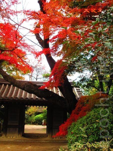 东京哲学堂公园红叶深深即景。(容乃加/大纪元)