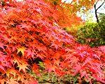 【文史】霜枫红于二月花 枫香坡念帝尧