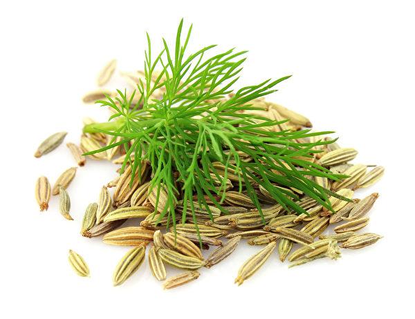 茴香富含抗氧化物、優質油脂類、維生素、礦物質與纖維。茴香可促進營養素的消化、吸收,來幫助避免脹氣。(Fotolia)