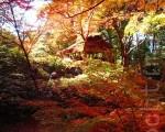 六义园,金秋中的茶屋与枫红景致,一景一境皆有诗歌。