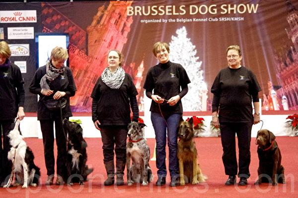 比利时布鲁塞尔第118届狗展掠影(萧依然/大纪元)
