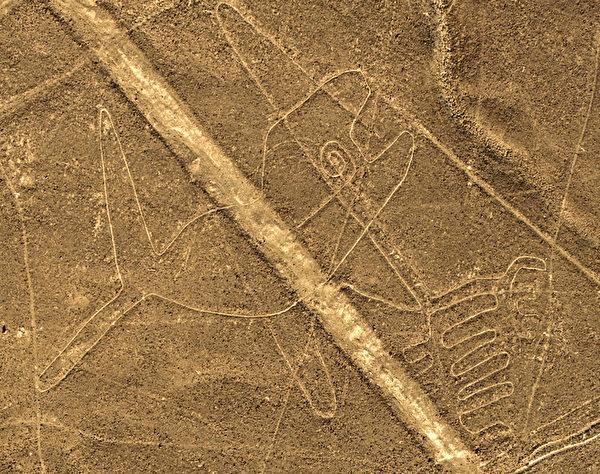 秘鲁地表的鲸鱼图案。(MARTIN BERNETTI/AFP)