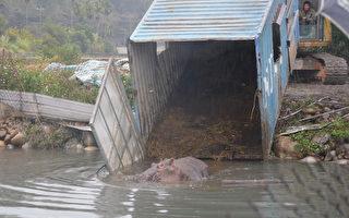 受傷「阿河」已緊急安置在大甲一處水池,進一步觀察是否有其他部位受傷。(台中市農業局提供)