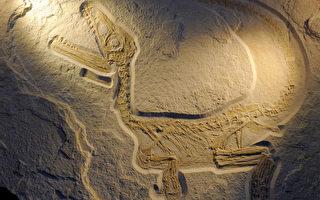 《揭開史前文明的面紗》大騙局 中國「長羽毛的恐龍」