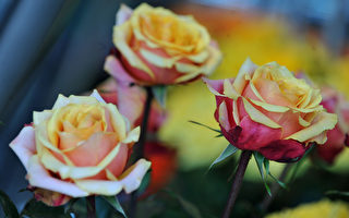 2月14日西洋情人节,美预计将花费高达189亿美元,买糖果、珠宝和鲜花。(LEGARIA/AFP/Getty Images)