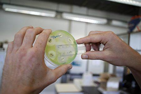 科学家发现新的抗生素teixobactin,能抑制细菌产生抗药性,或能对抗不怕任何抗生素的超级细菌。图为一名研究人员在测试细菌。(JORGE DIRKX/AFP/Getty Images)
