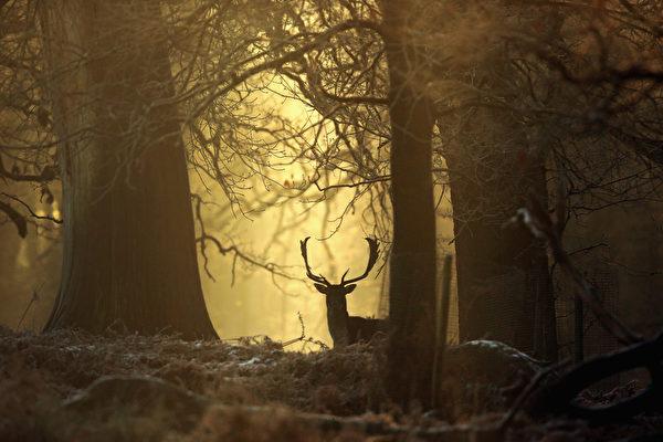 2014年12月29日,英国奥尔特灵厄姆,邓纳姆梅西公园冬天日出美景。(Christopher Furlong/Getty Images)