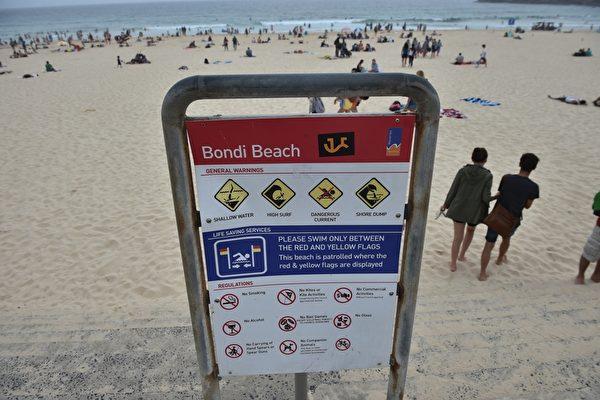 鲨鱼现身 雪梨邦迪海滩短暂关闭