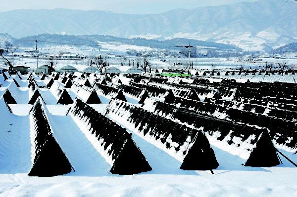 临近南北韩休战线的宾治盆地是有名的干菜产地,是在高山地带用传统的方式干燥,营养非常丰富。(杨口郡观光科提供)