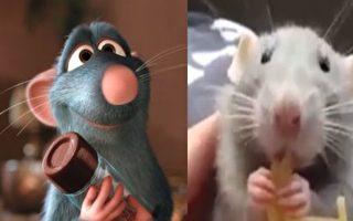 这只小仓鼠像不像料理鼠王?(视频截图/大纪元合成)