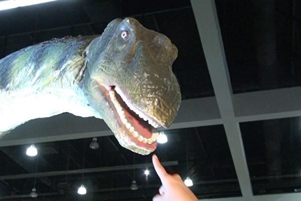凶猛眼神 逼真表情 数十恐龙现洛城