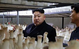 外媒表示,朝鲜向海外派出劳工的企图也在遭到国际社会的抵制。图为金正恩最近视察一座蘑菇农场。(KCNA / AFP)