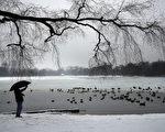 美國東北部將遭受2015年第一場主要暴風雪的襲擊。圖為1月24日,紐約布魯克林展望公園內的積雪。(Spencer Platt/Getty Images)