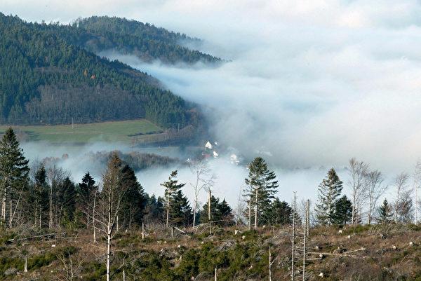 雾笼罩在德国黑森林巴登附近。(MICHAEL LATZ/AFP/Getty Images)