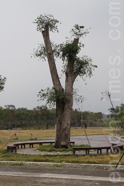 园区东测入口设有漂流木入口意象设施,移植约500年树龄的台湾榉,塑造亮点。(施芝吟/大纪元)