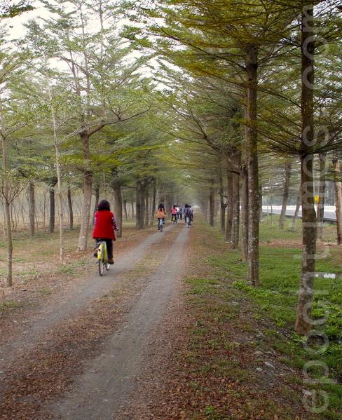 在森林园区内骑乘脚踏车,欣赏园区之美。(施芝吟/大纪元)