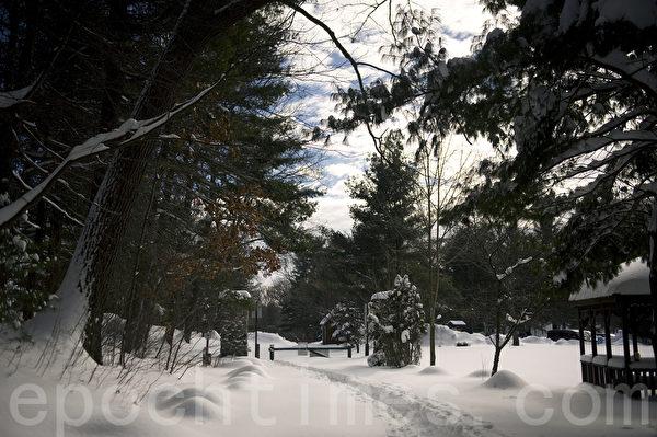 2015波士頓暴風雪後,公園裡人煙稀少。(攝影:徐明/大紀元)