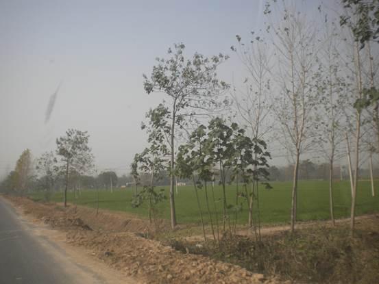 河南商丘市双庙村死了6百人,算世界艾滋病死亡率最高的地方。依稀可见村庄。2013年11月陈秉中在村边十个小时,跟踪的警察就是不让他进村调查。(陈秉中教授提供)