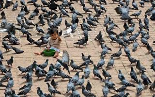 在意大利著名水城威尼斯,聖馬克廣場千萬不要餵鴿子喔,因為那可能會被罰款。(PRAKASH MATHEMA/AFP)