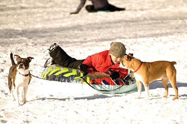2015波士頓大風暴後,幼童及狗共同玩雪。(攝影:徐明/大紀元)