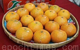 卓兰高品质水果-柑橘。(许享富 /大纪元)