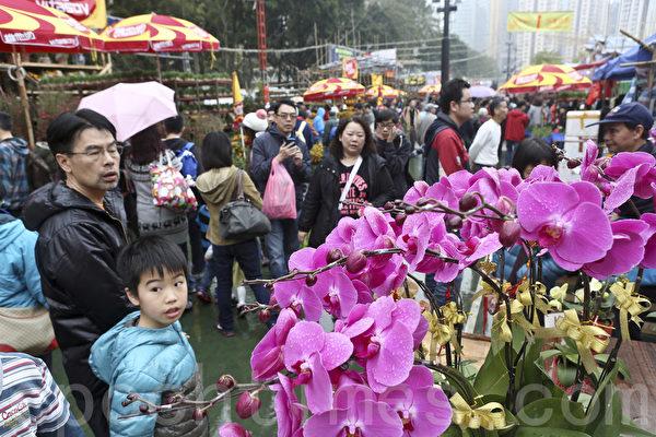 售卖兰花等年花的邱小姐表示,兰花价格方面跟往年相若,大红色的蝴蝶兰最好卖。(余钢/大纪元)