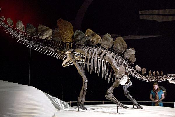 英自然歷史博物館  藍鯨標本取代恐龍