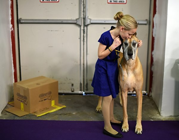 11岁的小主人带着大丹犬参赛。(TIMOTHY A. CLARY/AFP/Getty Images)